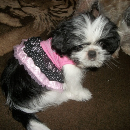 baby cleo, in her new dress!