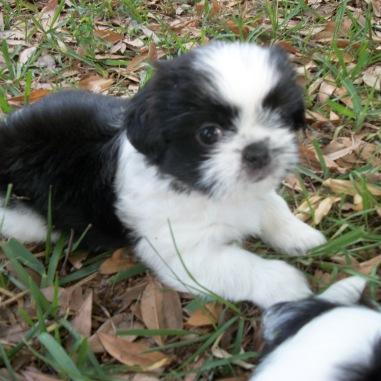 baby Cleo, my dearest