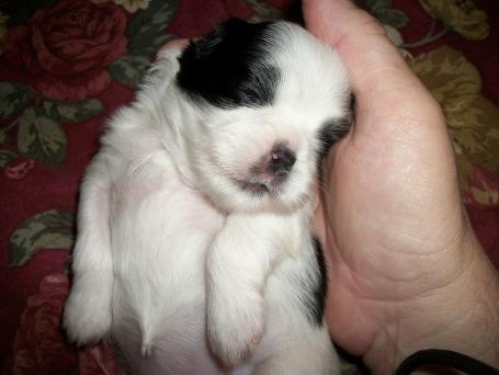 one of izzy's babies