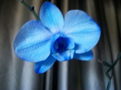 breathlessly blue