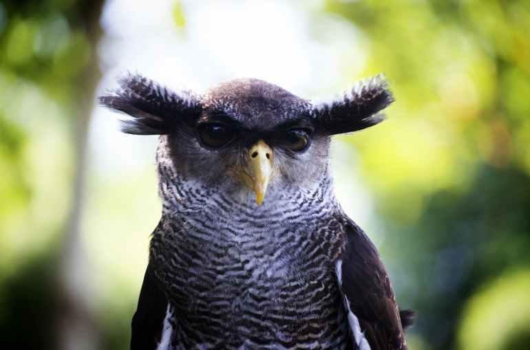 nature bird head owl