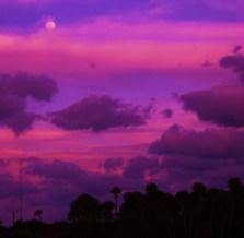 Pink Dusk©STMartin